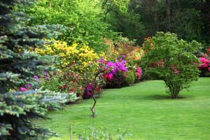 Colourful Flowering Shrubs In A Spring Garden